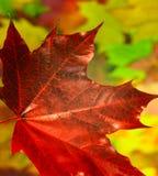 De herfstachtergrond, bladdaling, val van het blad Stock Foto's