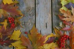 De herfstachtergrond, Esdoornbladeren met kastanjes op een houten lijst Stock Afbeeldingen