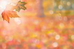 De herfstachtergrond (exemplaarruimte) Royalty-vrije Stock Afbeeldingen