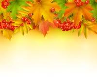 De herfstachtergrond of grens Stock Afbeeldingen