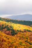 De herfstachtergrond in hout Verticale mening van een bos, bovenkant Stock Fotografie
