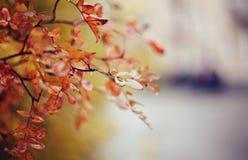 De herfstachtergrond met berktakken Stock Afbeeldingen
