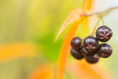 De herfstachtergrond met bessen stock afbeeldingen