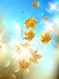 De herfstachtergrond met bladeren. Stock Afbeelding