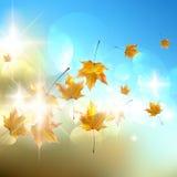 De herfstachtergrond met bladeren. Royalty-vrije Stock Foto