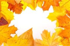 De herfstachtergrond met bladeren Royalty-vrije Stock Afbeeldingen