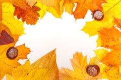 De herfstachtergrond met bladeren en kastanjes Stock Foto's