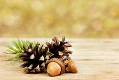 De herfstachtergrond met denneappels en eiken eikels op houten raad tegen bokehachtergrond Royalty-vrije Stock Afbeelding