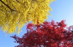 De herfstachtergrond met esdoorn en gingobladeren Stock Foto