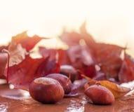 De herfstachtergrond met kastanje Stock Afbeeldingen