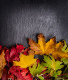 De herfstachtergrond met kleurrijke de herfstbladeren op donkere lei Stock Foto's