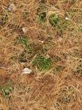 De herfstachtergrond op de gazonnaalden Stock Foto's
