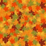 De herfstachtergrond van bladerenesdoorn Stock Foto