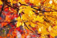 De herfstachtergrond van gouden en rode de herfstbladeren Stock Afbeelding
