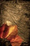 De herfstachtergrond van Grunge Stock Afbeelding