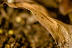 De herfstachtergrond van het bladontwerp Gele, oranje, bruine kleur Selectieve nadruk Samenvatting gestemde foto, retro kleuren D stock fotografie