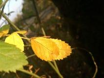 De herfstachtergrond van oud bos royalty-vrije stock foto
