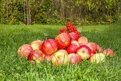 De herfstappelen op gras Royalty-vrije Stock Fotografie