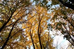 De herfstavond, in het bos Stock Foto's