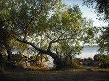 De herfstavond op de kust van het meer stock afbeelding