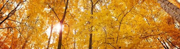 De herfstbanner, achtergrond Stock Afbeelding