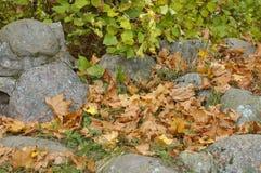 De herfstbegin Stock Foto's