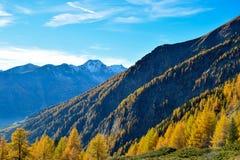 De herfstbergen met gele sparren royalty-vrije stock foto