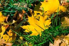 De herfstblad stock fotografie