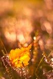 De herfstblad Stock Foto