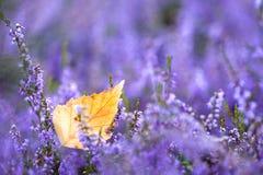 De herfstblad Royalty-vrije Stock Fotografie