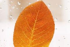 De herfstblad Royalty-vrije Stock Foto's