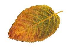 De herfstblad Royalty-vrije Stock Afbeelding