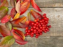 De herfstblad en bes Royalty-vrije Stock Foto's