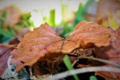 De herfstblad in gras Royalty-vrije Stock Afbeeldingen