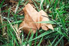 De herfstblad onder het gras Stock Foto