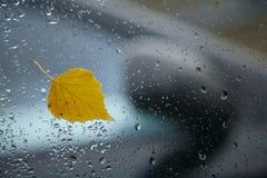 De herfstblad op de auto windiw in regenachtige dag Stock Afbeeldingen
