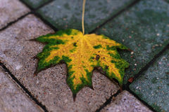De herfstblad op de bestrating Stock Foto's