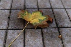 De herfstblad op de bestrating Royalty-vrije Stock Afbeeldingen