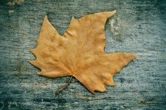 De herfstblad op een doorstane houten achtergrond Stock Foto