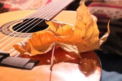 De herfstblad op gitaar royalty-vrije stock afbeelding