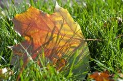 De herfstblad op groen gras stock fotografie