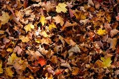 De herfstblad op grond Royalty-vrije Stock Afbeeldingen
