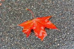 De herfstblad op het asfalt Royalty-vrije Stock Afbeelding