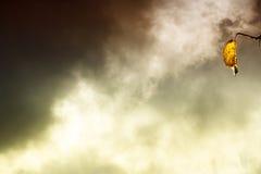 De herfstblad tegen een donkere zonsonderganghemel Royalty-vrije Stock Foto