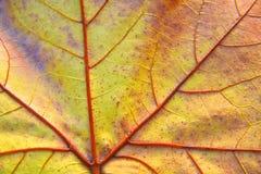 De herfstblad van de close-up Stock Afbeeldingen