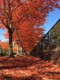 De herfstbladeren   stock foto's