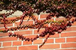 De herfstbladeren Royalty-vrije Stock Fotografie