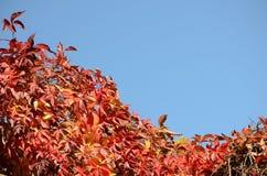 De herfstbladeren Royalty-vrije Stock Afbeeldingen