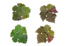 De herfstbladeren Royalty-vrije Stock Foto's