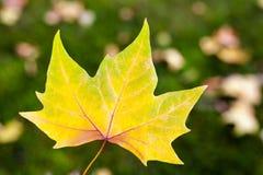 De herfstbladeren Stock Fotografie